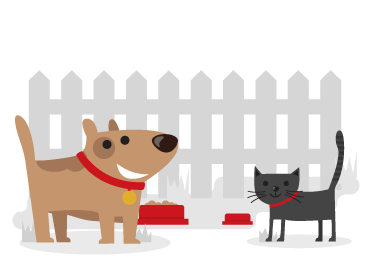 A brown dog and a black cat covered by cheap pet insurance from Compare Insurance Ireland